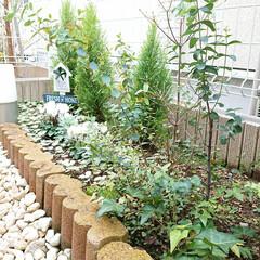 ウッドスティック/セリア/花壇作り/100均 セリアで買ったもの2個目は、花壇にウッド…