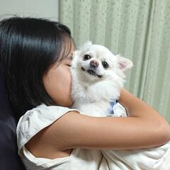 抱っこ/ペット/チロル 最近小5娘ちゃんは愛犬チロルが大好きで、…
