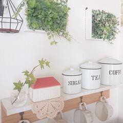 ヘデラ/100均/DIY/キッチン雑貨/セリア ヘデラの一輪挿しを新しくしました♪ お庭…