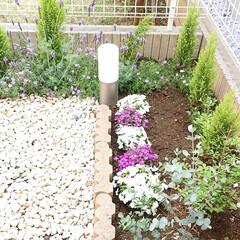 お庭/のんびり/ガーデニング/わたしのGW 私のGWはお庭のガーデニング頑張りました…