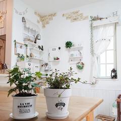 プランツ/ヘデラ/観葉植物のある暮らし/DIY/わたしのお気に入り 昨日お庭をどーにかしたく寒さに強そうな植…
