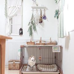ケージまわり/DIY/ペット/犬 チロルは家族がお出掛けすると自分の部屋に…(1枚目)