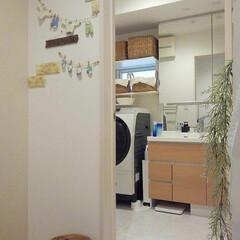 棚DIY/ガーランド作り/ニトリかご/TAKARASTANDARD/洗面所 今朝の我が家の洗面所です(*^^*) 支…