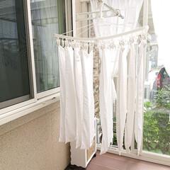 サンルーム/タオル/ニトリフェイスタオル/ニトリ/3COINS 新しく買ったニトリのフェイスタオルを洗い…