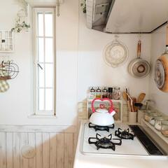 観葉植物/キッチン壁紙/フライパン収納/キッチン雑貨/雑貨/暮らし/... お庭に植えたヘデラをキッチンに飾ってみま…