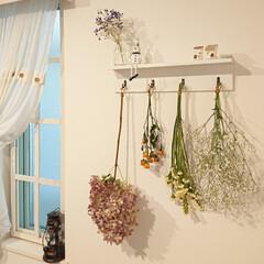 はな/ドライフラワー/DIY 近所で見付けた安い花屋さんで、スターチス…