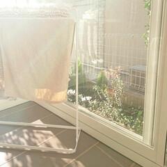 紅葉/お庭/洗濯物 今日はお天気良いので洗濯物が良く乾きそう…