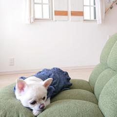 座椅子/ニトリ/チロル 昨日ニトリで座椅子を買いました。 背もた…