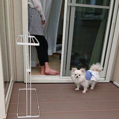 チロル/ペットと暮らす家「house-zoo」/サンルーム/令和元年フォト投稿キャンペーン 怖がりなチロルをサンルーム気に入って欲し…