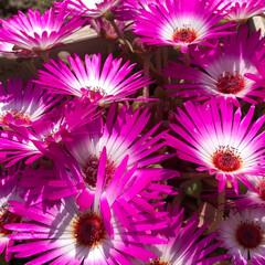 住まい 庭の花満開💐(1枚目)
