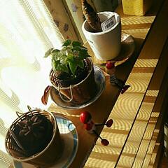 植物 今日はいい天気☀で~す ☀の光を浴びない…
