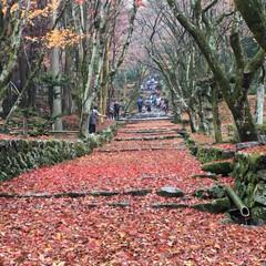 秋本番/秋/落ち葉 落ち葉の絨毯🍁
