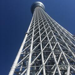 ツリー/東京/旅/空/青 うぁおー こ.これはー スカイツリーだぁ!