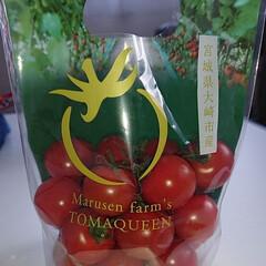 トマト/フード/グルメ このトマトめちゃくちゃ 美味しいです(*…