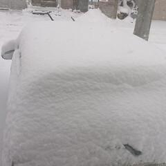 寒い/雪かき嫌い/風景 おはようございます⛄  一晩で車が埋まっ…