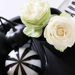 Rose/バラのある暮らし/バラ/イマニワ/ガーディニング/令和の一枚/... バラの備忘録  わが家で唯一グリーン系の…