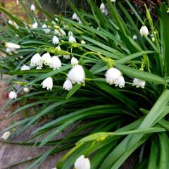 花の生活/庭の花/春の一枚/フォロー大歓迎/風景/花景色/... 庭の花達 Ⅰ  春の花達が、楽しそうに咲…
