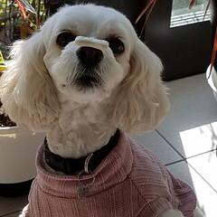 犬のいる暮らし/新年挨拶/お正月2020/暮らし/フォロー大歓迎/生花/... 🎍謹賀新年✨ ご挨拶〰❤ 『皆さん本年も…(2枚目)