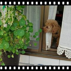 花/いぬ/ペット/グリーン/チュッ テラスのお花に チュッ💓🐶🐾