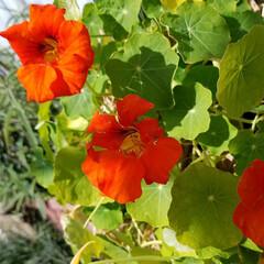 わんこのいる暮らし/ガーデン/花/必需品/私の必需品/いいねTop10決定戦/... 花は、私の必需品(*^▽^)/★*☆♪🌼…(6枚目)