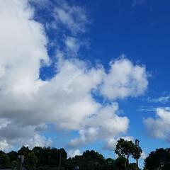 青空/おでかけ/LIMIAおでかけ部/おでかけワンショット 綺麗な空✨  💬ごめんなさいね🙏