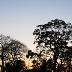 わたしのお気に入り/夕焼け景色/風景/🌳のシルエット 夕焼け空に🌳のシルエット 私のお気に入り…