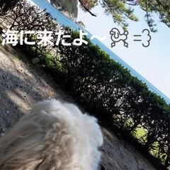 お散歩シリーズ/お散歩/ビーチ/海/お出かけ/いぬ/... 🌴🏖️ 一年ぶりの海~(*´艸`*)⛵ …
