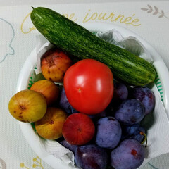 キュウリ/トマト/無花果/プルーン/家庭菜園/収穫/... 台風🍃🌀☔前に収穫しました~🎵  プルー…