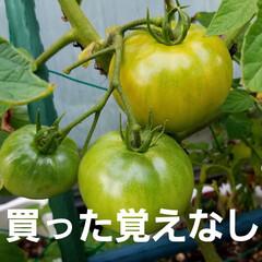 実/庭/畑/実のなってる物/ガーデン/🍘/... 庭の実がなってるものを👀📷✨しました🎵 …(5枚目)