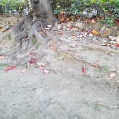 秋の日暮れ/秋の空/落ち葉/秋/おでかけ 『秋の一枚』 病院の帰りに公園へ 一枚目…(2枚目)