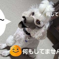 舐めれない/犬がアヒルに/みるく/ワンコの口に/アヒル口/モノトーン/... こんにちは✨😃 段々風も強くなって来てま…(3枚目)