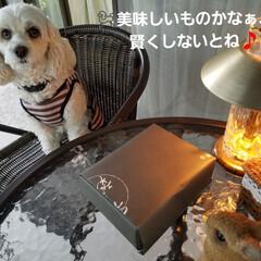 嬉しい贈り物/LIMIAペット同好会/ペット/ペット仲間募集/犬/わんこ同好会/... 子供からの贈り物🎁🎵  🐩と一緒に開ける…