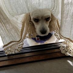 ワンコ大好き/うちのこベストショット/ペット/ペット仲間募集/犬/わんこ同好会/... 🐶『昨夜、叱られてテラスに出されたの~😢…