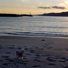 犬の散歩/フォロー大歓迎/冬/ペット/ペット仲間募集/犬/... 🐩⛱️で、のびのびとお散歩~🐾  砂浜の…(5枚目)