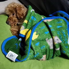 ワンコのお昼寝/LIMIAペット同好会/フォロー大歓迎/ペット/ペット仲間募集/犬/... 🐶お散歩に疲れたのかなぁ~💤  実家の🐩…