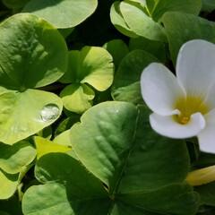 わんこのいる暮らし/ガーデン/花/必需品/私の必需品/いいねTop10決定戦/... 花は、私の必需品(*^▽^)/★*☆♪🌼…(10枚目)