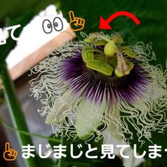 湿気対策/梅雨/梅雨対策/梅雨対策アイテム/教えて!みんなの梅雨対策 💠が咲かなくなって…🍀🍀🍀葉ぁ~    …(3枚目)