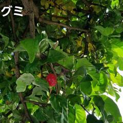 つぼみ/木の実/ガーデニング/ガーデン/庭の花 自宅の庭の木の実や蕾をアップしました🤭