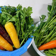 人参/サラダ/野菜/おかず/野菜サラダ/家庭菜園/...   🍴最近はまってるサラダ🥗‼️  と言…(2枚目)