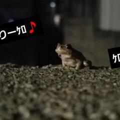 カエル/庭/玄関で 今日は、少し遅めの帰宅…🏡  帰宅すると…
