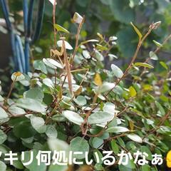 庭/お庭の虫たち/おでかけワンショット/フォロー大歓迎/至福のひととき/風景/... 庭の虫🎵勇敢な戦士⚔️と空飛ぶ羽根 カマ…