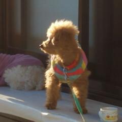 犬の散歩/フォロー大歓迎/冬/ペット/ペット仲間募集/犬/... 🐩⛱️で、のびのびとお散歩~🐾  砂浜の…(6枚目)