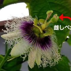 湿気対策/梅雨/梅雨対策/梅雨対策アイテム/教えて!みんなの梅雨対策 💠が咲かなくなって…🍀🍀🍀葉ぁ~    …(2枚目)