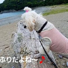 おでかけ/癒し/花/犬と花/犬のいる暮らし/散歩/... 🐩🚶♀️久々に海に行きました🚐💨🎵  …(2枚目)