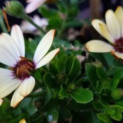 花/にわ/ガーデニング/花のある暮らし/ガーデン雑貨/ガーデニング雑貨/... まだ寒かったりですが、お庭の花達が、あち…(5枚目)