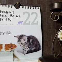 カレンダー/名言集 🐈にゃんの📆カレンダー🎵2.22  今日…