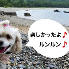 おでかけ/癒し/花/犬と花/犬のいる暮らし/散歩/... 🐩🚶♀️久々に海に行きました🚐💨🎵  …(5枚目)