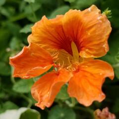和の花/涼しげ/山野草/ガーデン/ガーデニング/庭の花/... photoとは関係ない私事ですが( *´…(7枚目)