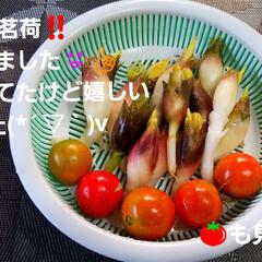 秋茗荷/秋の味覚/ご飯/暮らし/食欲の秋 嬉しき事が〰️。:+((*´艸`))+:…