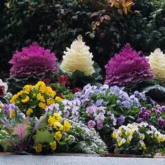 花は春の必需品/花畑/おでかけ/景色/はな/春/... 🌼春の必需品と言えばお花🎵と言っても過言…